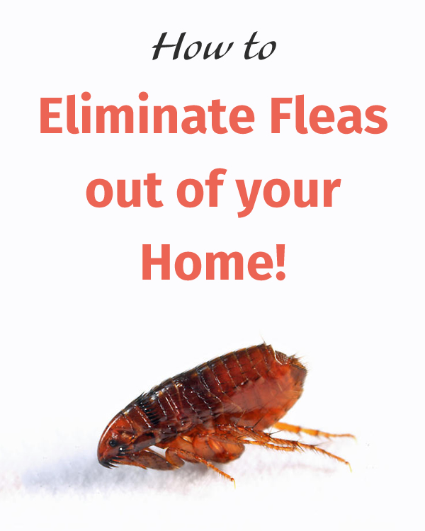 How to Eliminate Fleas out of your Home