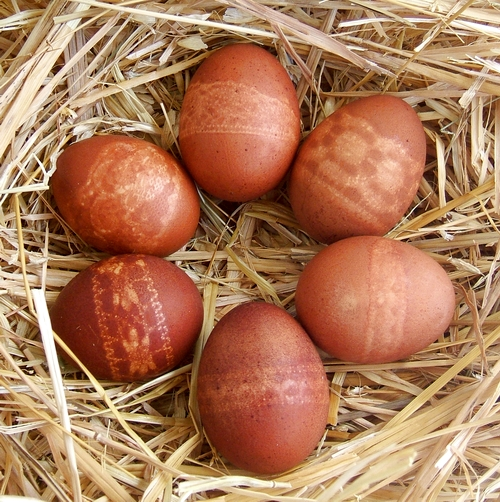 How to dye Easter eggs with onion