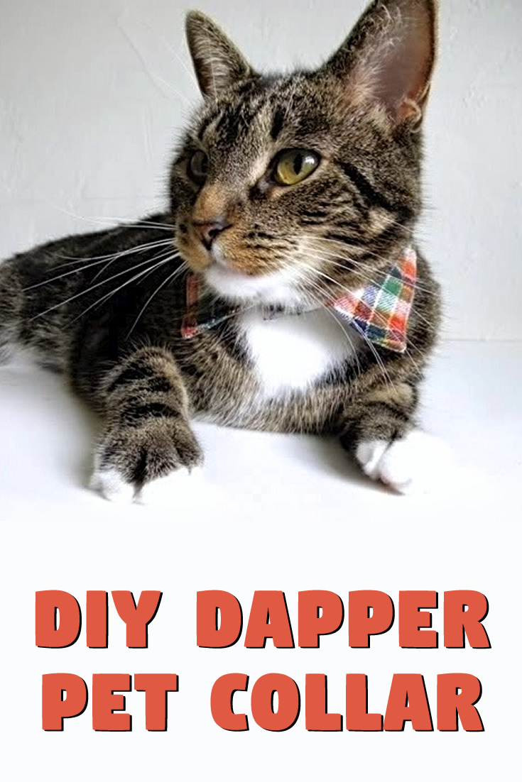 DIY: Dapper Pet Collar